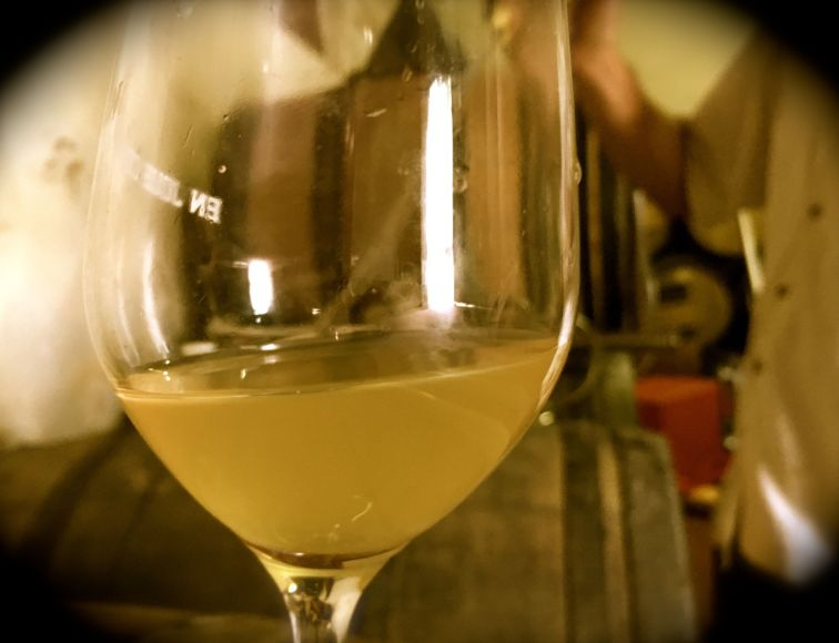 Xaviers vin