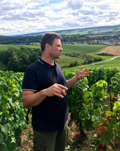 Vincent i vingården