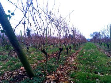Hazel End vingården